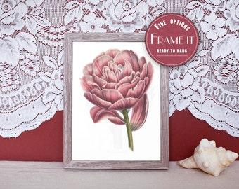 """Vintage illustration of Tulip Flower - framed fine art print, flower art, 8""""x10"""" ; 11""""x14"""", FREE SHIPPING - 260"""