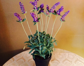 LavenderPlant .Silk Lavender in a black pot with green foilage