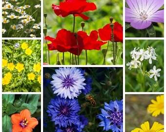 Wildflower seeds - Traditional Cornfield Mix - 2g