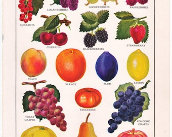 vintage fruit print, bright and colorful charming 1940's cottage style decor