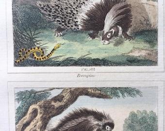 1807 Original Antique Hand-Coloured Engraving - Porcupine, Tendril (Tenrec) & Coendu (Prehensile-Tailed Porcupine) - Buffon - Zoology