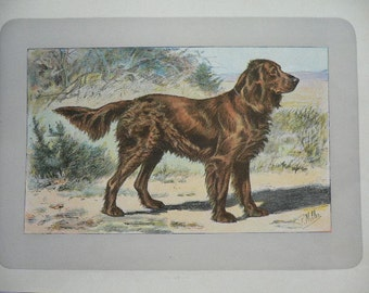 ANTIQUE 1907 GERMAN SPANIEL signed dog print Chromolithograph P Mahler German artist Rare Collectors item Christmas, Birthday gift Authentic