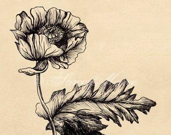 Foliage Studies Flower - Fine Art Illustration