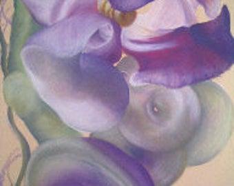 Snail vine flower and seedpod