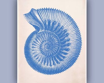 Ammonite Seashell  Print,  sea fossil ammonite print,  Marine Natural History Wall Decor, Nautical art,  Blue Print, Coastal Living