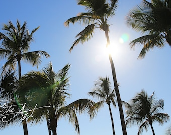 Sunshine and Palm Trees Photograph - Digital Download - Landscape Photography