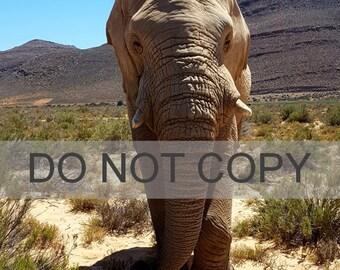 Elephant Downloadable Photo/Print, Safari, South Africa