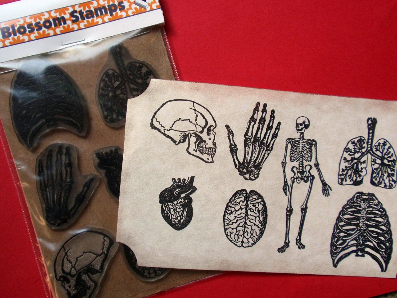 Anatomía desmontado Set de sello de goma sellos hechos a