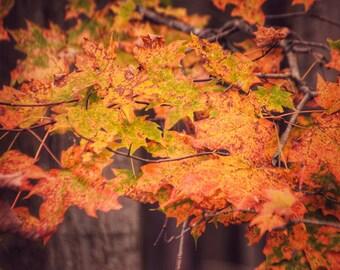 Fall Foliage, Fall Trees Print, Fall Print, Autumn Print, Leaves Print, Leaves Photo, Autumn Trees Print