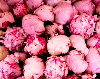 Paris Photography - Fragrant Pink Peonies, French Market in Southern France - Pink Wall Art, French Print, Peony in France