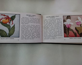 30s vintage Whitman book- Wild Flowers of America, 1932, floral, field study