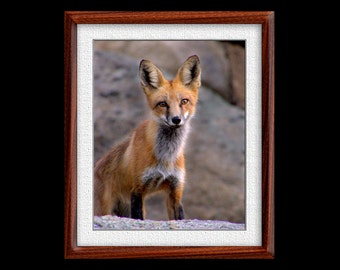 Fox Print - 8x10 or 11x14 Fox Photograph - Wildlife Photograph - Wildlife Print - Fox Art (P30)
