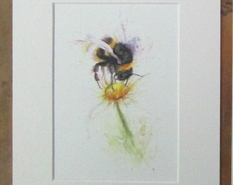 Bee on daisy, watercolour print in a 10 x 8 mount, ready to pop into a frame.