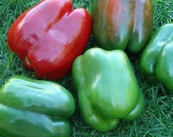 "California Wonder Bell"" - sweet pepper - gardening seed pack"
