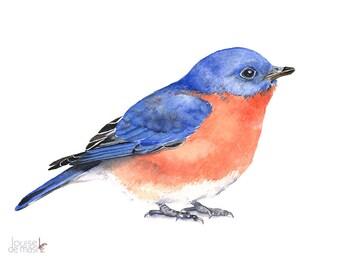 Bluebird Watercolor Painting - bird print of watercolor painting A3 size print wall art print - bird art print BB2013