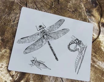 Dragonfly nature growning up Enamel Metal TIN SIGN Wall Plaque
