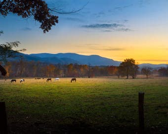 Horses in Cades Cove, Great Smoky Mountains National Park, Appalachian Mountain, Landscape Photograph, Yellow, Blue, Tennessee Art