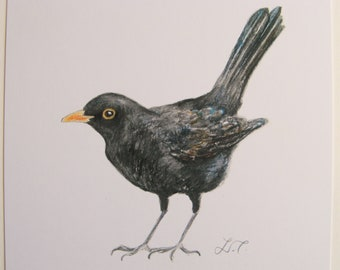 Blackbird, art print, wildlife print, watercolour print.