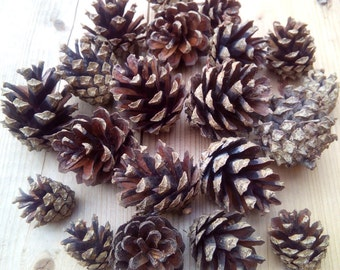 Pine cones, 20 pcs, natural supplies, pinecones for craft