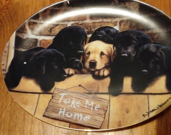 Take Me Home by Nigel Hemming Dog Plate