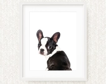 Nursery French Bulldog Printable Wall Art, Printable Baby Nursery Decor, Baby Wall Art, Nursery Printable Art, Instant Download Printable
