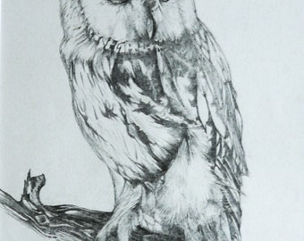 Dusty Owl. Original pencil/graphite drawing of a tawny owl by UK artist Deborah Driscoll Free Postage