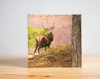 Stag Deer Greetings Card