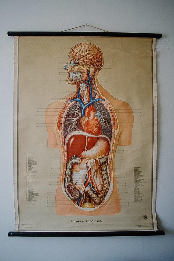 Ursprünglichen anatomischen Jahrgang deutsche pädagogische