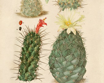 Palm Springs Cactus Blossom Print. Vintage Botanical Desert Educational Chart Diagram Cactus Desert Poster Pull Down Chart flowers CP263