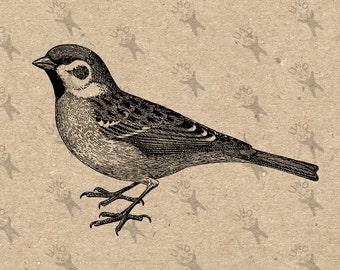 Vintage image Bird Robin Sparrow Clip Art Design Transfer Digital File Instant Download Burlap Fabric Transfer Iron On Pillows Totes 300dpi