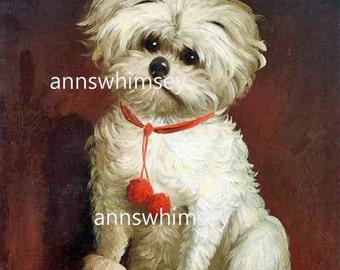 """Kitchen Art, Kids' Room art,  Little White Dog """"I HATE Having My Picture Taken"""" Gift for Dog Lover, Print Child's Room #308"""