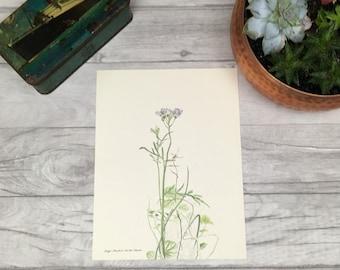 Floral drawing flower drawing cuckoo flower lady's smock purple flower dainty flowers girls nursery botanical drawing vintage print etsy uk