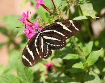 Butterfly on Flower 10, Child's Photo, 5x7 photo, 8x10 Photo, 11x14 Photo, Child's Decor