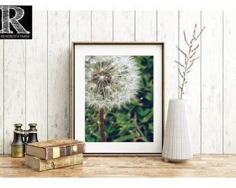 Dandelion flower photo printable picture instant download dandelion seeds whimsical wall art country photo make a wish flower seeds wall art