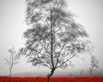 Tree photography, fine art photography, nature photography, landscape print, atmospheric, framed print, mounted print, wall art, unique