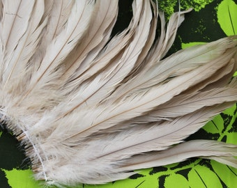 Coque feathers in ivory, creme, tan, beige color- length 10-12  inches length