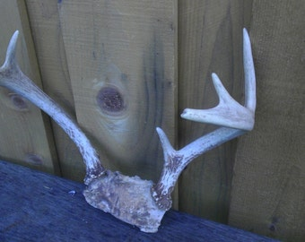 Vintage Antlers Deer Rack Shed Buck Point Hunting Rustic Cabin  Lodge Decoration hook hat coat Man Cave Chandelier Wall Mount Unusual Gift