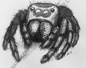 Jumping Spider Pen & Ink Print