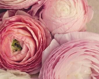 Fine Art Print, Pink, Ranunculus Flowers, Flower Print, Ranunculus Photo, Blooms, Cottage Art, Spring, Botanical Art, Romantic, Home Decor