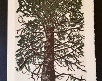 Snowy Idaho Pine Broadside (Poster)