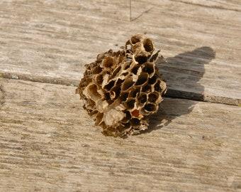 Real Wasp Nest, Natural Wasp comb