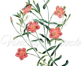 Pink Flowers CLipart, Pink Flowers Digital Image, Botanical Illustration, Digital Image for Printing, Artwork - INSTANT DOWNLOAD - 1140
