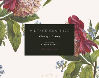 Vintage Clip Art and Graphics - Vintage Peony - Botanical
