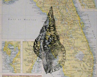 """Conch Shell on Vintage Map of Florida Print - 8"""" x 10"""""""