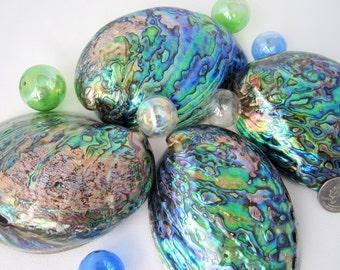Beach House Decor Seashells - Nautical Decor Shells - Paua Abalone Sea Shells - Polished Abalone - Beach Wedding Shells,  4-5.5in, 1PC