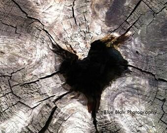 Deep Rooted Love Print