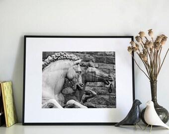 Italian Horses, Photographic Print, 5x7, 8x10