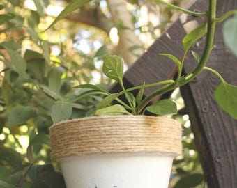 """4"""" Jalapeño Business » Jalapeño Plant Indoor and Outdoor Pot or Planter"""