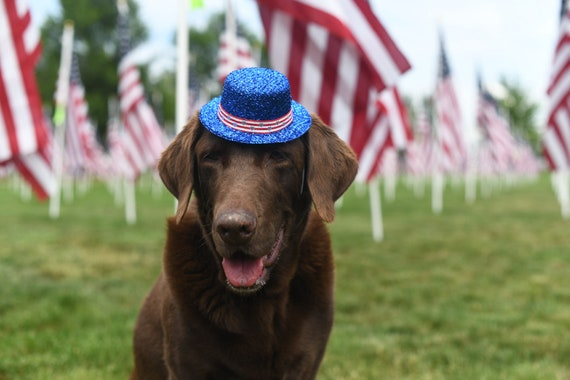 Fourth of July Costume for Dogs || Uncle Sam Hat || Independence Day Hat and Bow Tie
