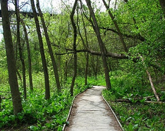 """Travel Photography, """"The Path"""", Minneapolis Photography, Nature Photo, Customizable Sizing Upon Request"""